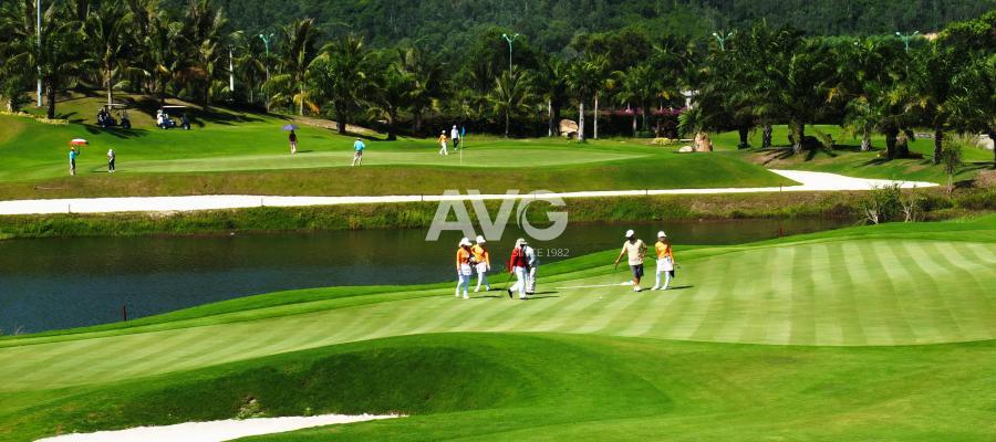 Cỏ nhân tạo sân golf