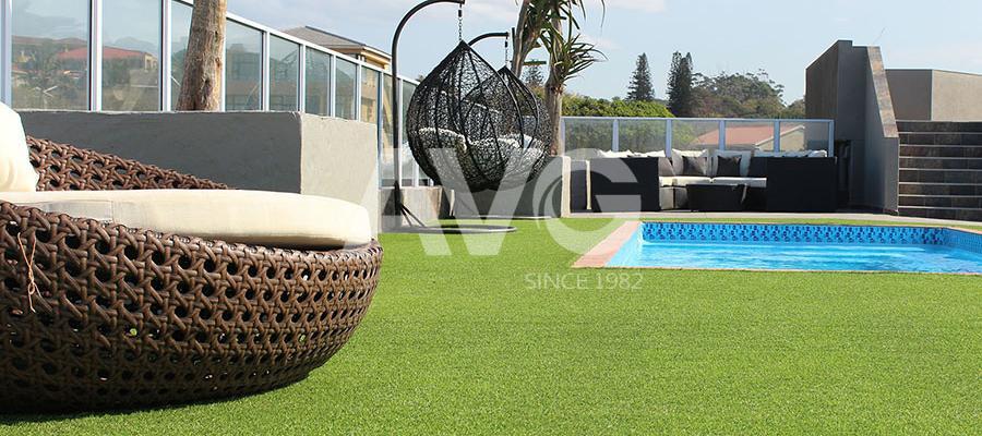 Cỏ trang trí bể bơi(Nam Phi)