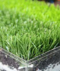 Dòng cỏ Stem