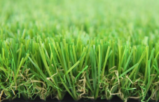 Dòng cỏ Stem Eco 115