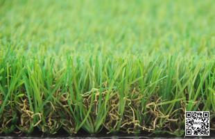 Dòng cỏ Eden Stem 116